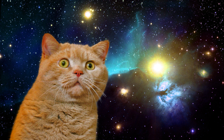 SPACE-TIME CAT