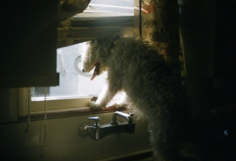 dog at window